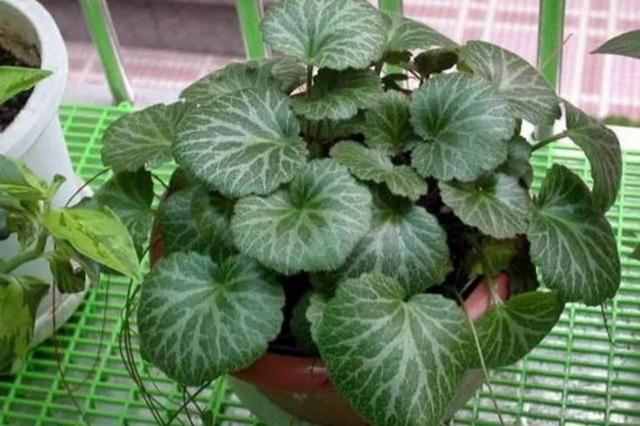 养在室内遮阴处不需要管理的绿植, 请问还有比它们耐阴的么