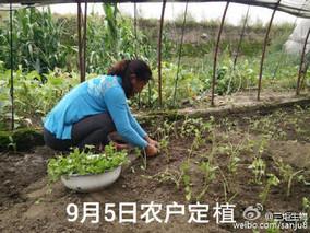 芹菜用生物菌肥作基肥好