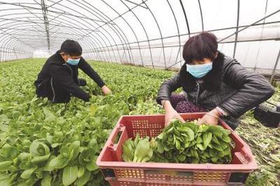 """上海嘉定:""""新式武器""""田间展风采,改良农机更具本土特色"""