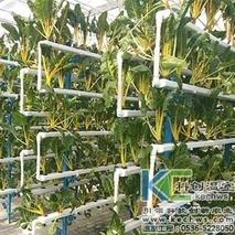 黄瓜秋冬茬栽培中定植后的管理