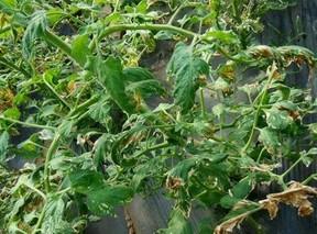 蔬菜错用农药后的补救办法