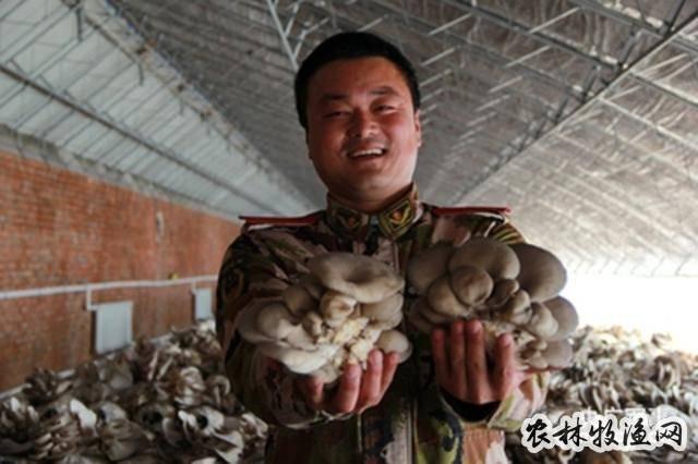 北京北湾村五个蘑菇大棚喜获丰收