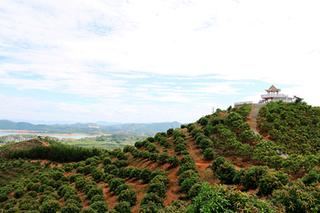 百色右江区加大财政支持稳定甘蔗产业发展