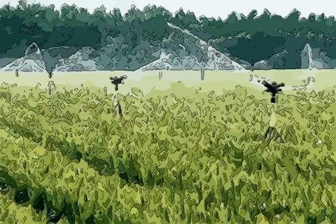 多措并举服务小麦灌溉