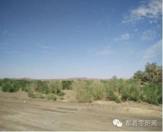 湖北荆州市林科院大力推进林业产业扶贫