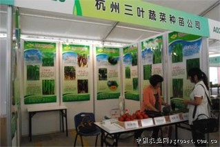 杭州:大量茄果类蔬菜上市