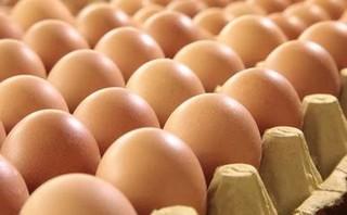 下半年鸡肉市场看好