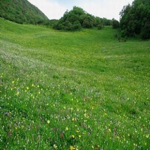 矮生百慕大草几月份种?矮生百慕大和果岭草区别