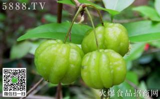 灌木蒲桃的功效与作用