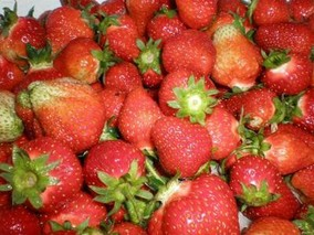 无锡本地草莓上市