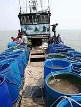浙江嵊泗县4亿粒海蜇苗种放流入海