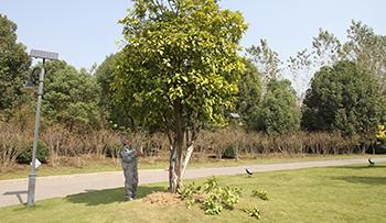 养护人员必备的园林树木整形修剪指南