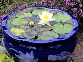 """北京最""""年长""""植物温室在冬季可观赏睡莲花开"""