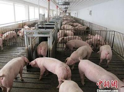 生猪养殖企业可获流动资金贷款贴息支持