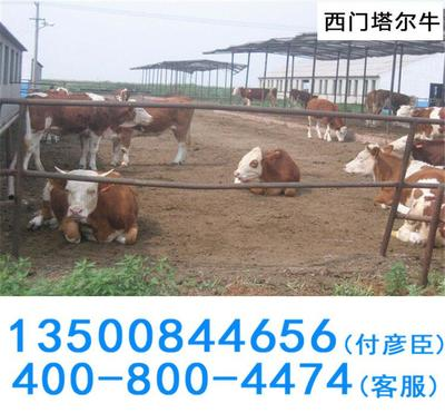 滨州市博兴成中国白对虾生态养殖*县