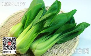 如何更好的栽培青梗菜