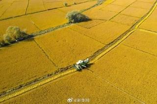 韩长赋:确保水稻产量稳定在2亿吨以上