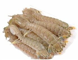 野生皮皮虾