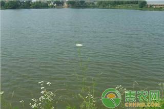 多雨季节小龙虾养殖水体调控和疾病