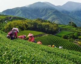 央企齐发力 助力农业发展、确保粮食安全