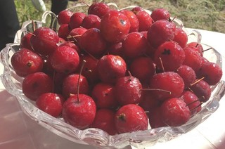 清水河海红果