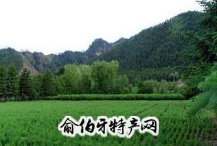 拜泉县苗木