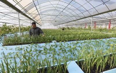 新余着力提升蔬菜产业发展质量