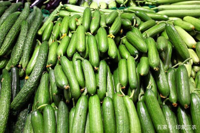 横扫极速5分排列3水果黄瓜引领高品质口感型极速5分排列3水果黄瓜新潮流!