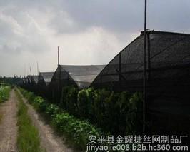 遮阳网夏秋芹菜的栽培