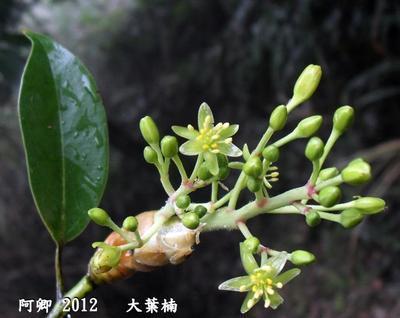 https://www.nlmy.com.cn/yaocai/vsuwuv.html