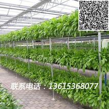 一种多层立体栽培温室大棚
