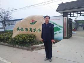 安徽怀远县陈集镇:打造树莓小镇 助力精准脱贫