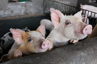 """地方猪种慢慢被边缘化留住猪肉""""土""""味面临诸多挑战"""