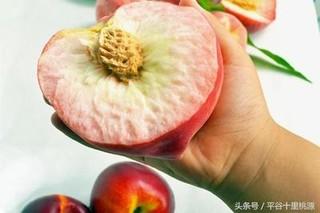 """北京""""平谷大桃""""入商圈办集市"""