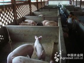 打造美丽猪场福建样板