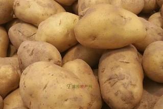 张易马铃薯