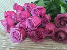 玫瑰的品种有哪些?常见玫瑰花品种