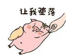 河北省猪肉批发价格连续两周小幅下跌