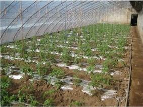 日光温室新型滴灌系统