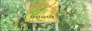 """黑龙江""""寒地苹果""""获国家农产品地理标志保护"""