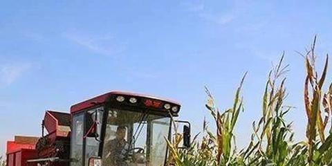 河北秋粮收获面积超七成 夏玉米实收测产812.5公斤