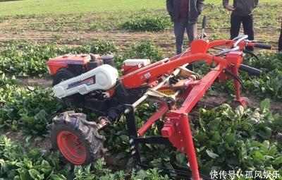 """耕种收""""一条龙""""解决,叶菜机械化生产提效10倍"""