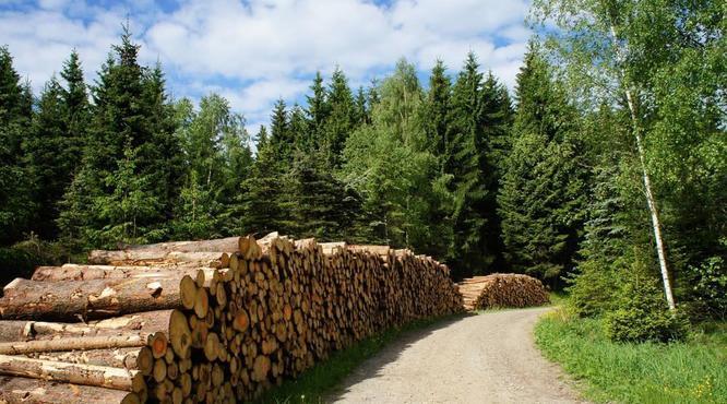 2018年林业产值达7.33万亿元