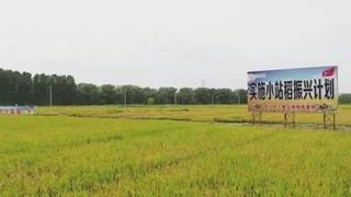 天津市宝坻区多措并举推动水稻产业提质增效