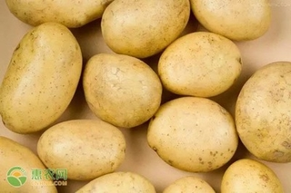 今日土豆多少钱一斤?2021年3月31日土豆价格最新行情