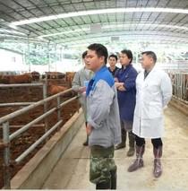 广西肉牛肉羊产业创新团队现代种业岗位专家一行到灌阳县开展肉牛产业扶贫行动