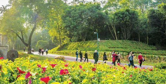 """德化龙门滩霞山村:林下种植中草药,绿色发展有""""良方"""""""