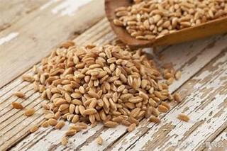 现在小麦价格还能涨吗?后期行情如何?