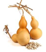 葫芦种子怎么种?葫芦的种植方法和时间