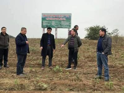湖南省农业极速5分排列3厅调研我县黄花菜特色产业聚集区建设
